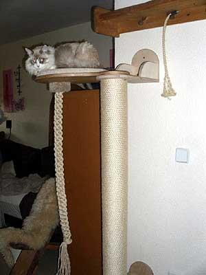 sibirische waldkatzen vom hohen timp. Black Bedroom Furniture Sets. Home Design Ideas